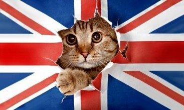 Названия животных на английском языке или Звериный английский